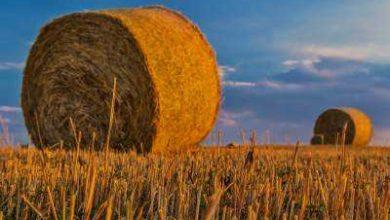 tarım işçisi nereye dava açacak